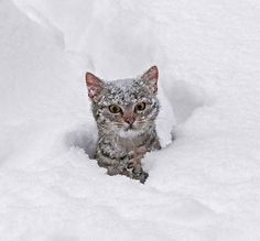 funny angry cat covered snow