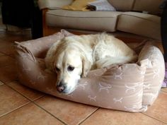 Harvey in a Bolster Bed #happydog #dog #happycustomer