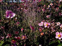 j.africk pink flowers