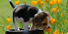 Come proteggere i nostri animali dai parassiti della primavera