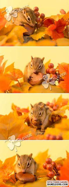 Осенние листья и белка с орехом - Растровый клипарт   Autumn leaves and chipmunk