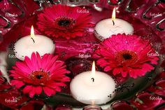Google Image Result for http://www.museevents.com/files/images/Hot%2520pink%2520gerbera%2520daisy%2520floating%2520centerpiece.jpg