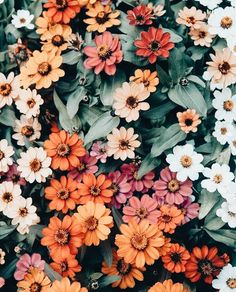 66 New ideas plants aesthetic photography - Flora - Pflanzen Summer Flowers, Beautiful Flowers, Flowers Nature, Colorful Flowers, Autumn Flowers, Colorful Plants, Nature Plants, Beautiful Beautiful, Exotic Flowers