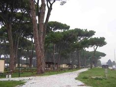 Sea Pines Campground ~ Camp Darby, Italy. I always loved those Umbrella Pine Trees!!