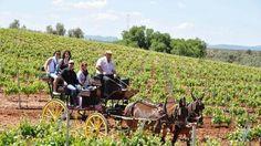 La Ruta del Vino propone paseos entre viñedos, circuito termal y catas en bodegas