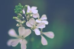 Ethereal Photograph Dreamy Flower Photography by InLightImagery