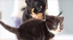 Gattini e cuccioli: il primo incontro [video]