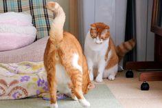 ブログ更新ボールを追いかける猫たち 二匹の猫と徒然なるままに