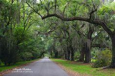 Magnolia Plantation in Charleston South Carolina via A Bowl Full of Lemons