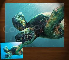 SEA TURTLE drawing 1 CANVAS PAINTING. All original paintings direct from the artist, available as oil or acrylic, feel free to choose the artistic technique of your preference. To purchase this, or for painting orders, please contact us at info@collectorware.com, or visit http://www.collectorware.com/canvas-1animals-wildlifeA.htm