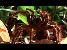 How will puppy-size spiders affect sci-fi?