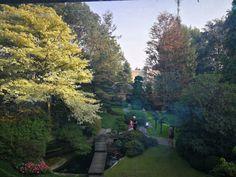 Bonsai, Country Roads, Bonsai Trees, String Garden