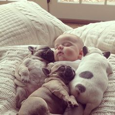 Baby Covered with French Bulldog Puppies
