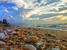 Shells & Surf