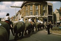 Elephants from Billy Smart's Circus walking through Northampton town centre I remeber them doing this in Gloucester as a kid. Northampton England, Northampton Town, Gloucester, Local History, Jerusalem, Elephants, Bristol, Centre, Walking