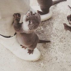 Otters being playful