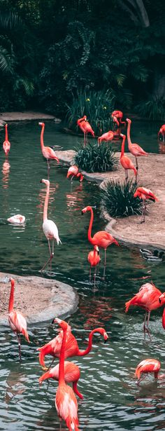 Top 10 Zoos In The USA To Take Your Kids To