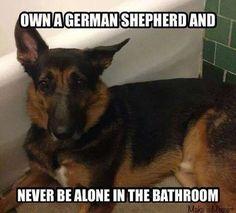 The German Shepherd Accurate!
