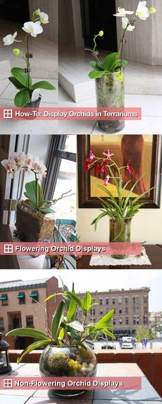 DIY INDOOR GARDEN :: How to Plant Orchids in Glass Terrarium Vases :: A step by step guide. You will need an orchid (Trader Joe's sells them for as little as 6 bucks), river rocks (available in approximately 1 lb. netted backs @ the dollar store or Target sells 5 lb. tubs for 5 bucks), sphagnum moss & sheet moss (& some 20-20-20 orchid fertilizer if you want to keep 'em healthy & consistently blooming). | #casasugar #orchids #terrariums