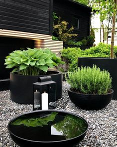 Modern Garden Design, Modern Design, Black Garden, Lush Green, Garden Pots, Water Garden, Garden Projects, Backyard Landscaping, Garden Inspiration
