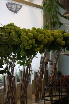 Viburnum snow ball. Shop presentation at the florist - so maybe this one is green but not actually growing...