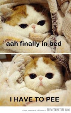 Finally in bed.....my life everyday!