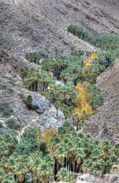 Located on the land of the Agua Caliente Band of Cahuilla Indians, Indian Canyons offers easy to strenuous hiking through some amazing flora and fauna, gorges overlooking the desert, streams lined with California Fan Palms, the 60-foot Tahquitz Falls, ancient rock shelters and paintings and Cahuilla art and artifacts.