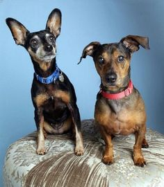 Owner passed- bonded 11 yr old need a home-Dusty and Fancy are in Woodinville, WA
