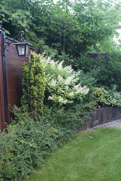 zaczarowany ogród 1
