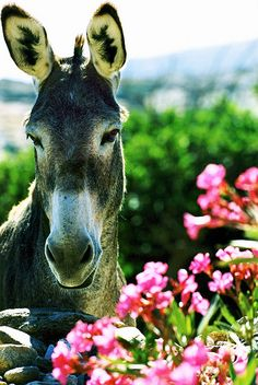 Stopping to smell the roses, he isn't in a hurry, you can learn from a jackass, can't you?