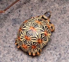 Amphibians, Reptiles, Spotted Turtle, Tortoise Turtle, Tattoo Inspiration, Cute Animals, Purses, Christmas Ornaments, Yellow