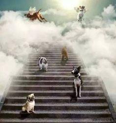 Bildergebnis für hund RIP