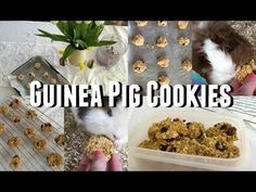 DIY Guinea Pig Treats - Cookies |♡Imy'sAnimals♡ - YouTube More