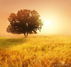 The field in summer - Landscape Photography by Alvar Astúlez <3 <3