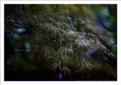 Sagano Rain #010 : Art Photography Poster (Kyoto Nara of The Zen) (Japanese Edition) by kitazawa-office, #Kyoto #Art #Japan