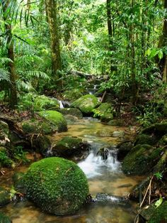 Amazon Rainforest.
