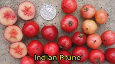 List of Fruits - Name of Fruits I - Learn English Fruits Name List, Fruit List, Fruit Names, Tart Taste, Eating Raw, Learn English, Preserves, Health Benefits, Plum