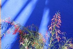 Desert Flowers, Los Cabos, Mexico. Contrasting colours on a little patio in Todos Santos.