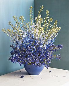 I have always had a weakness for Delphiniums even more so when they are complimented by a blue bowl and pale blue wall.