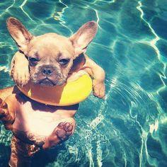 cute dog. swimming pool, yellow. blue. brown. Love it