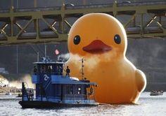 Florentijn Hofman: Rubber duck at Pittsburgh. 02/10/13