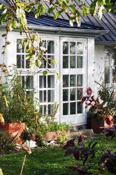 Höstträdgård, med fröställningar och vackra bladverk, hus med glasveranda