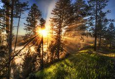 Morning. Coffee. Yellowstone. Fog. - Trey Ratcliff