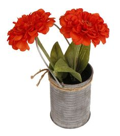 Blooming Spring 9'' Potted Zinnia-Orange