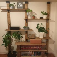 Satomiさんの、賃貸,地震対策,観葉植物,ダイソー,DIY,セリア,ディアウォール,BRIWAX,レンガ,壁/天井,のお部屋写真