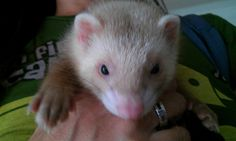Charly, con 3 meses. Su primer día en casa.