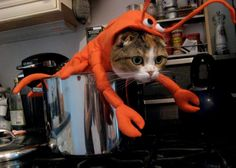 now that's the lobster i can like