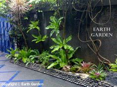 27 Best South Florida Gardens Images Landscaping 640 x 480