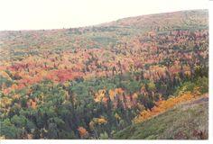 Endless color on Brockway Mountain, Copper Harbor, Mi