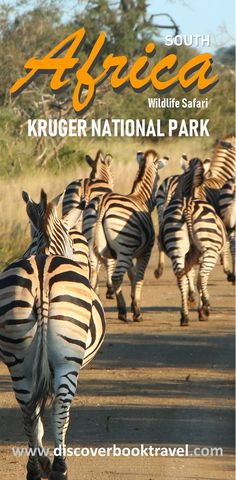 Kruger National Park in South Africa is one of the best places in Africa to experience an authentic wildlife safari.  Click to read more on what to see and what to do in Kruger National Park.    #discoverbooktravel #krugernationalpark #wildlife #safari #africatravel